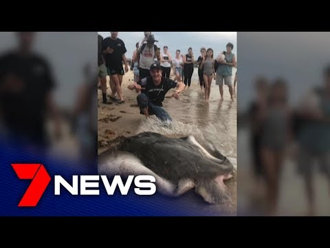 Angry Scenes As Stingray Caught At Brighton Beach | Adelaide | 7NEWS