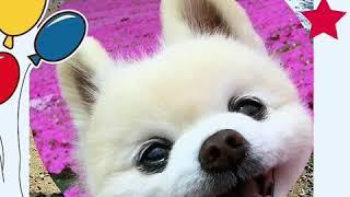 大好きな俊介くん💕 俊介くん 検索動画 27