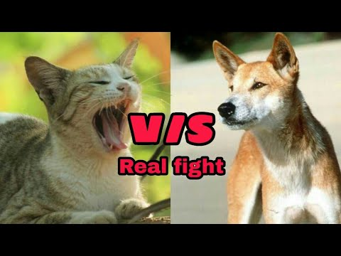 Funny videos-2 (cat and dog)