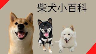 【品種動物系列】柴犬小百科