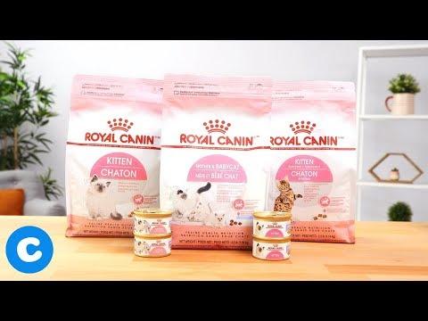 Royal Canin Feline Health Nutrition Birth Cat Food | Chewy