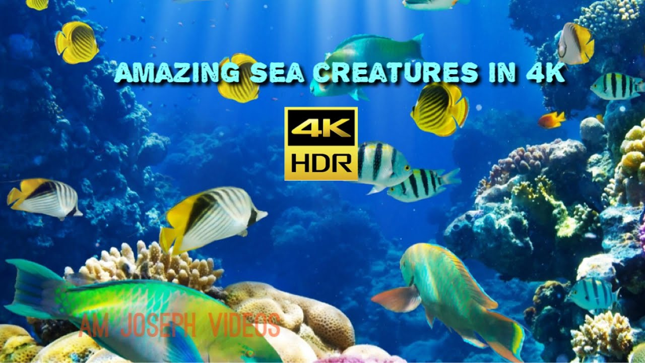 4K Sea Creatures | Nature Relaxation | Rare & Colorful Sea Life Video