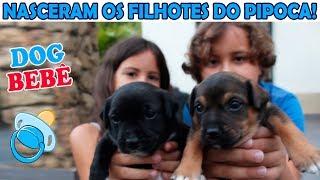 NASCERAM OS FILHOTES DO PIPOCA - nossos cachorrinhos bebês ♥