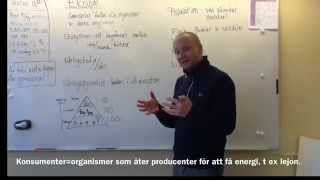 Bi - Sammanfattning Av Ekologi För Högstadiet.
