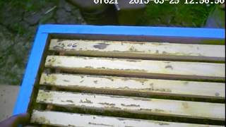 Моя пасека (пасека начинающего пчеловода)