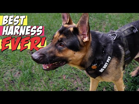 The BEST Tactical Harness For German Shepherds | K9 Tactical Gear Reviewed