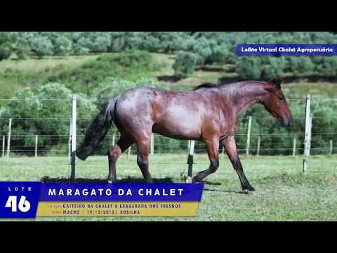 LOTE 46 - Maragato da Chalet