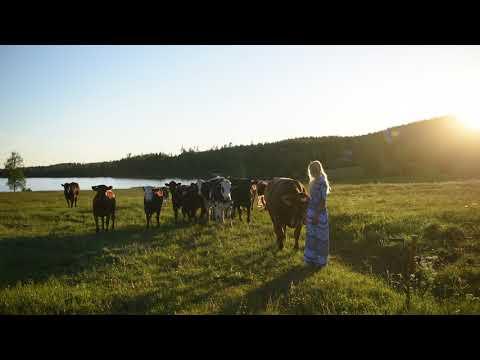 Kulning - Calling home my cow Stjärna