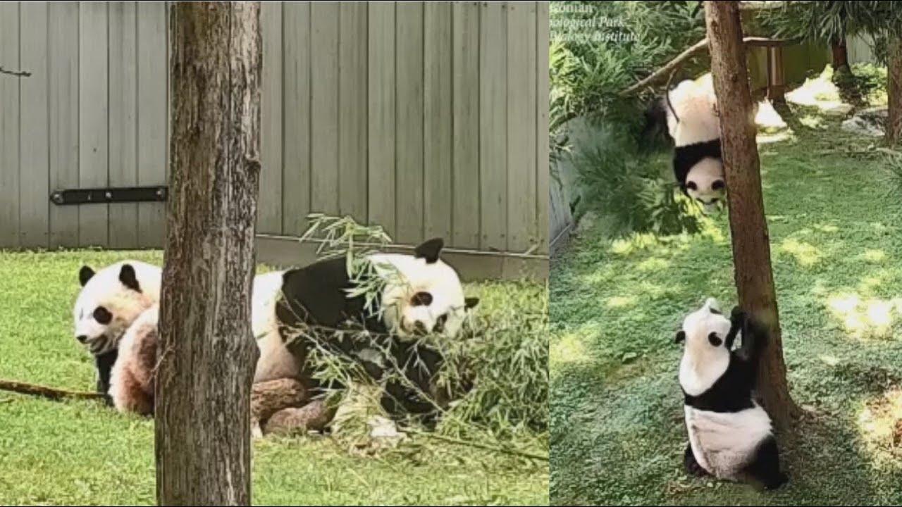 2021-07-23 Xiao Qi Ji ~ Tree Dangles & Mommie Wrangles