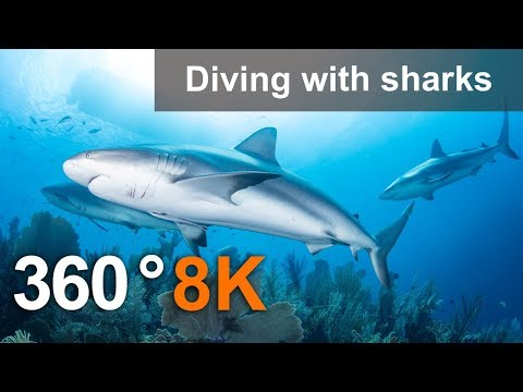 360°, Diving with