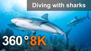 360, Diving with sharks. 8K Underwater video