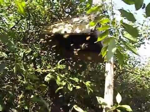 мазь ловить рой пчел