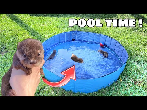 TEACHING BABY OTTERS HOW TO SWIM ! WHAT HAPPENS ?!