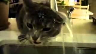 kucing lawak gila [RELOUD]