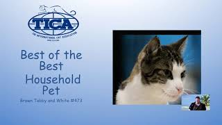 South Central TICA Virtual Cat Show 2020  Best of the Best FINALE!