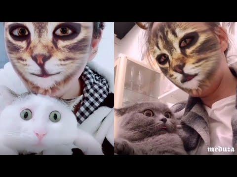 Кошкам показали людей-кошек. Они в ужасе!