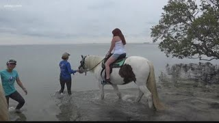 Hold your horses: Horseback riding ban could be coming to Tampa Bay
