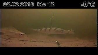 Pilkkikamera   Rautavesi 02.02.2018