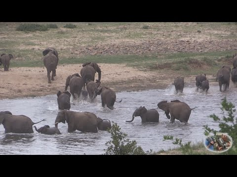 Elephants Of The Crocodile River