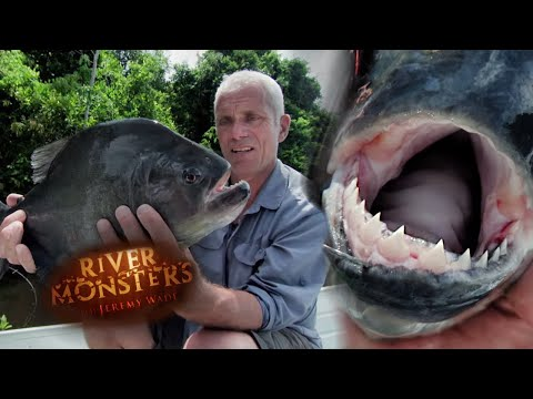 Catching A Black Piranha - River Monsters