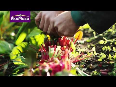 EkoPlaza Narrowcasting