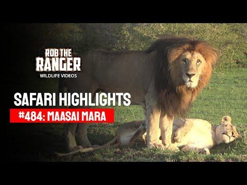 Safari Highlights #484: 22nd October 2017 (Latest Sightings) (4K Video)