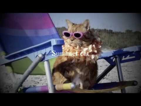 Summer cat - lyrics - www.abitofenglish.com