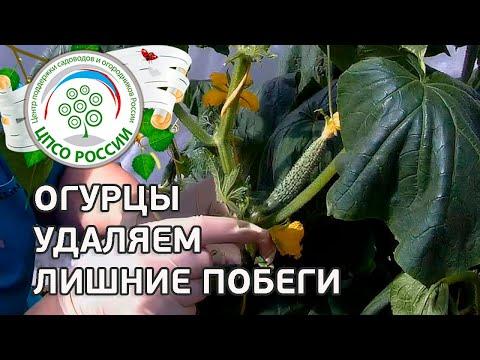 Выcокоурожайное выращивание картофеля