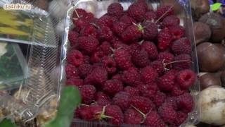 видео Выращивание саженцев в контейнерах » Садоводу, дачнику, огороднику.