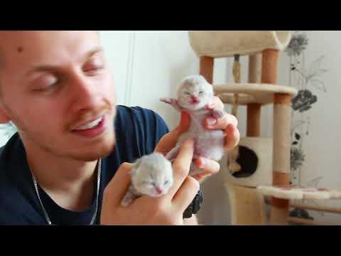 В питомнике родились новые котята! #Генодетки35
