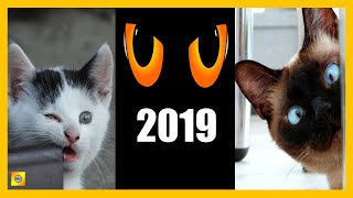 Cute Is Not Enough 👉 Funny Cats Compilation (Tik Tok 2019)