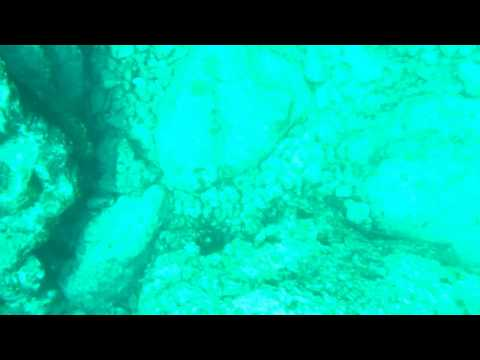 2016年7月30日大神島リーフエッジ素潜り