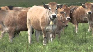 Richesses & traditions de l'Aubrac