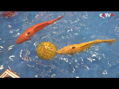Cute Robot Fish Doing Water Polo in Underwater Robot Competition