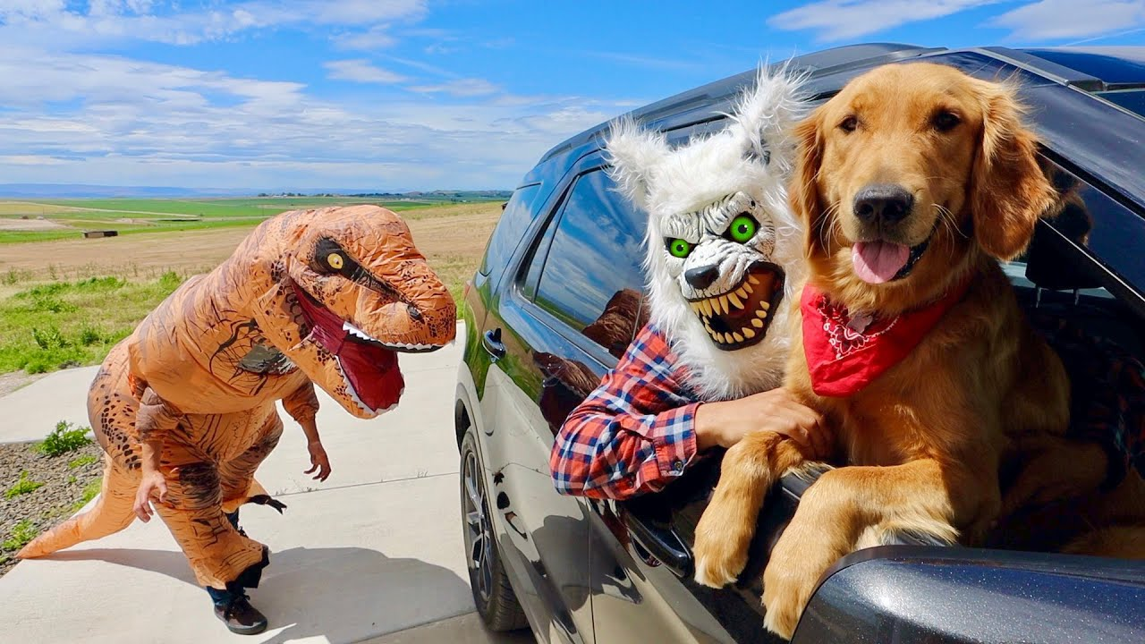 T-Rex Surprises Puppy & Wolf with Car Ride Chase!