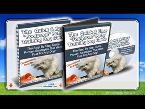 best-way-to-potty-train-a-puppy-in-7-days-watch-now