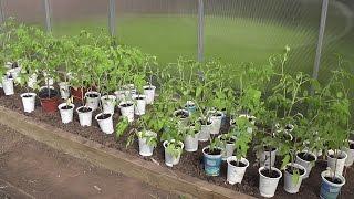 Выращивание томатов в теплице.Часть 1. Я сажаю.(В этом видео-ролике вы увидите начальные этапы выращивания томатов в теплице. Сначала мы их посеем, затем..., 2016-05-24T14:16:39.000Z)