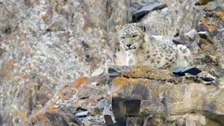 On Snow Leopard Mountain (15 min) - Planet Earth II - Behind The Scenes
