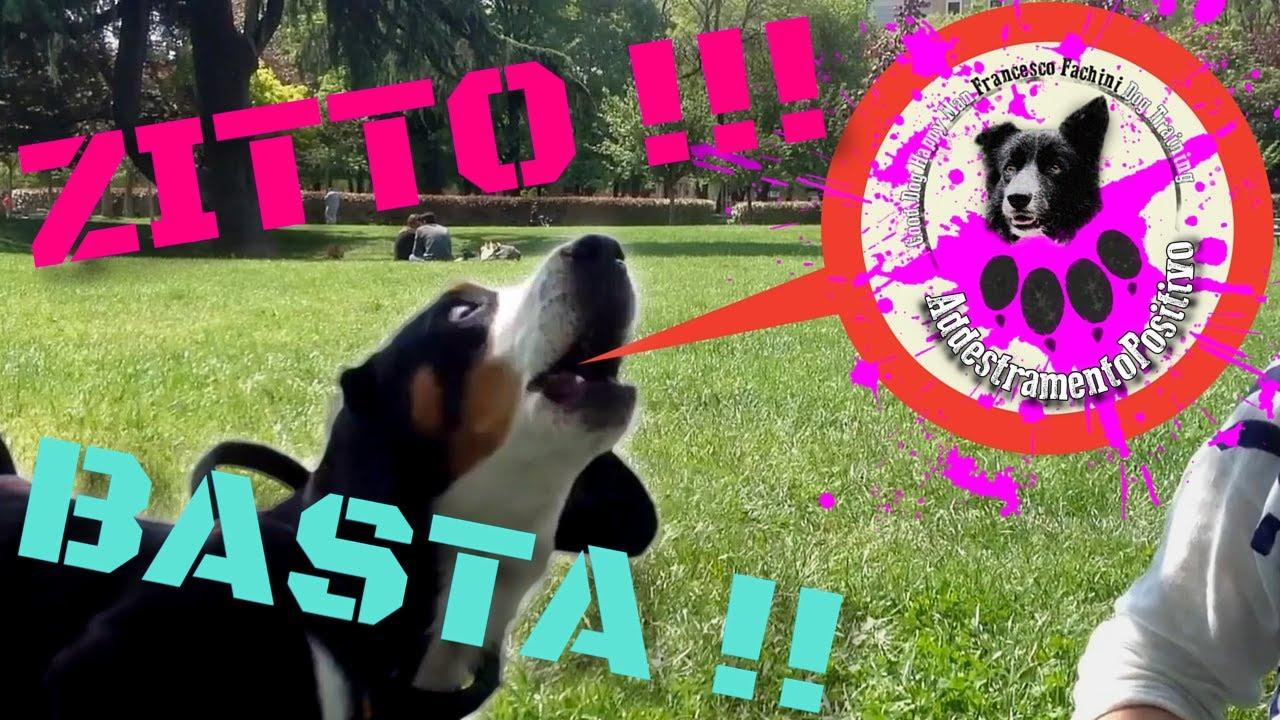 8 modi per calmare un cane in modo naturale | Mondopets.it