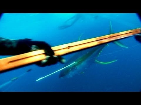 Epic Spearfishing Tuna Film
