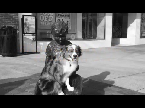 Want your to pup to come when called? | Best Miniature Australian Shepherd Trainers in Georgia