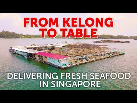 From Kelong To Table: Delivering Fresh Seafood In Singapore
