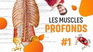 DOULEURS BAS DU DOS CAUSES - EPISODE #6 (Les Muscles du Dos Partie 1)