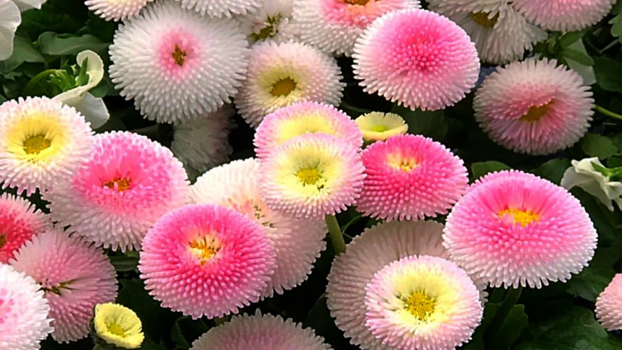 Colorful Flowers (HD1080p)