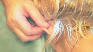 Массаж ушей. Релаксирующий массаж ушных раковин(Массаж ушей. Релаксирующий массаж ушных раковин. ➥Семинар проводит профессиональный массажист, SPA-терапев..., 2016-01-22T10:51:25.000Z)