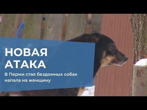В Перми стая бездомных собак напала на женщину