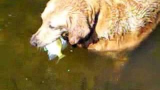 Dog Catches Fish - Amazing