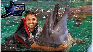 ഇവൾ പുലിയാ 😂😂/ Swimming With Dolphin