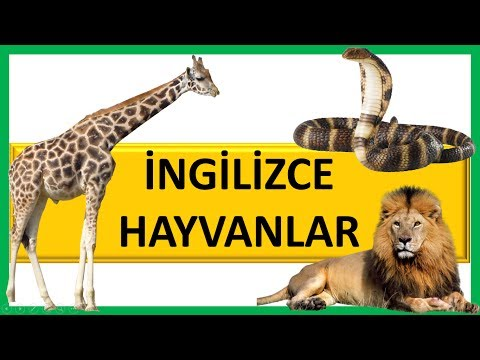 İngilizce Hayvanlar 2 - Learning Wild Animals Names For Kids