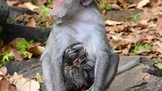 MG- Painful & So Hurt Jane Her Newborn! Million Sad & Pity Janet & Jane Need Vet Help Them
